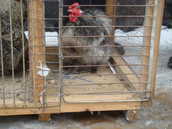 голубей 14.03.2010г. 016.jpg