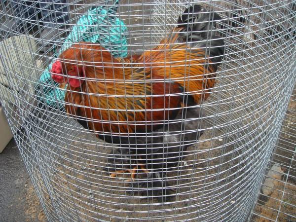 голубей 14.03.2010г. 028.jpg