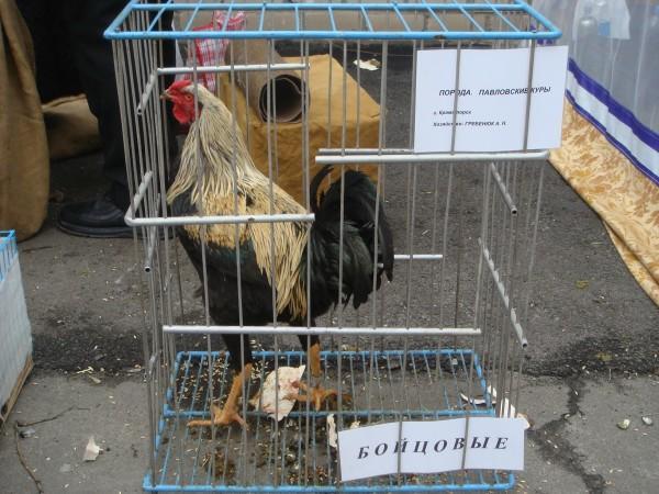 голубей 14.03.2010г. 063.jpg