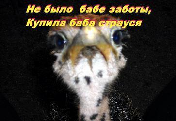 _страуся.jpg