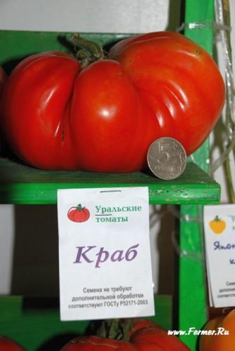 tomat.jpg