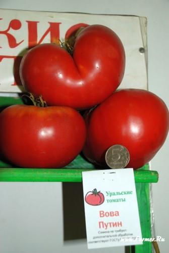 tomat_(4).jpg