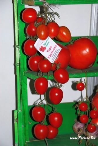 tomat_(6).jpg