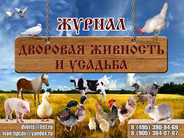 dvor_zhivn_baner_2000h1500_1.jpg
