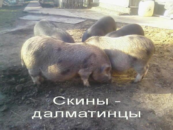 ryzhie_skiny.jpg