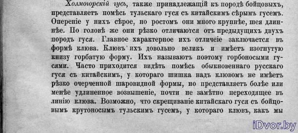 Холмогорские гуси. Абозин 1985 г.