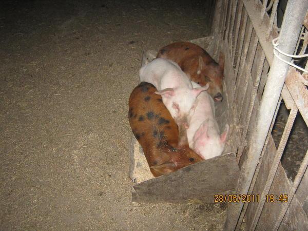 Я не знаю, почему они так любят в нём спать.