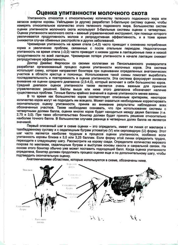 ocenka_upitannosti_molochnogo_skota_opisanie.jpg