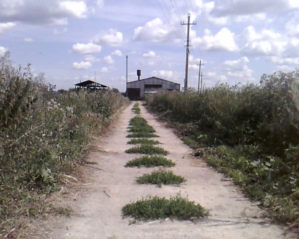 среди ферм и бурьяна
