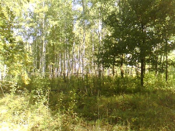 ну и в лес за грибами