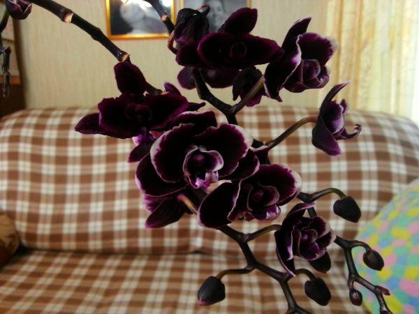 orhideya2.jpg