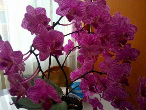 orhideya3.jpg