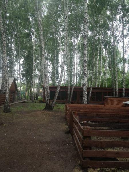 andrey-krasnoyarsk6.jpg
