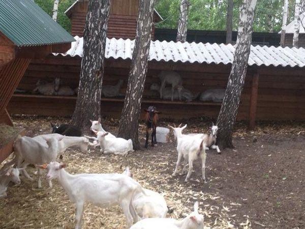 andrey-krasnoyarsk7.jpg