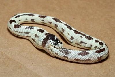 snake_001.jpg