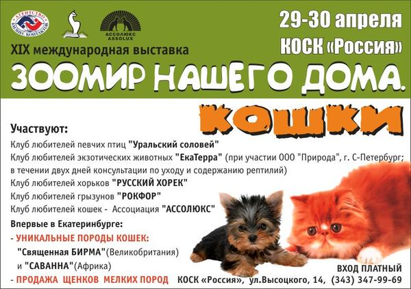 cat_800_2012.jpg