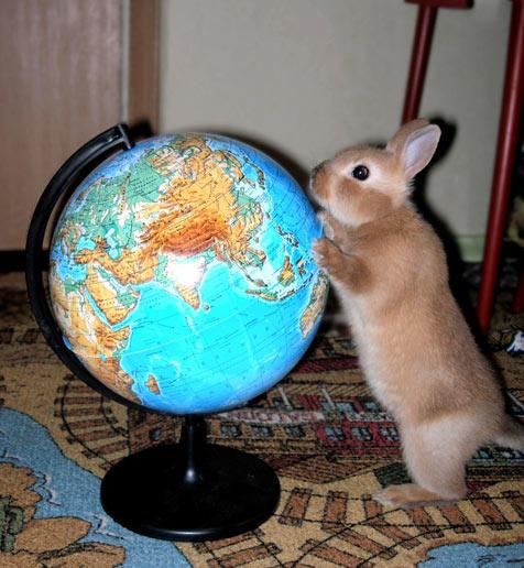 rabbit-facts-photos-30.jpg