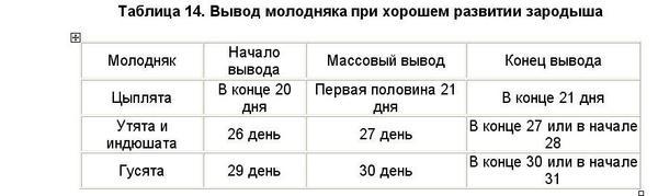 vremya_vyvoda_molodnyaka.jpg