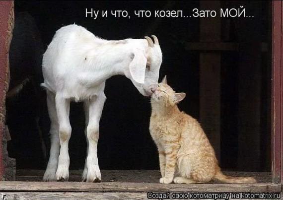 1316757206_catmatrix_1120_20.jpg