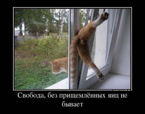 1326916109_1012_svoboda-bez-prischemlyonnyih-yaits-ne.jpg