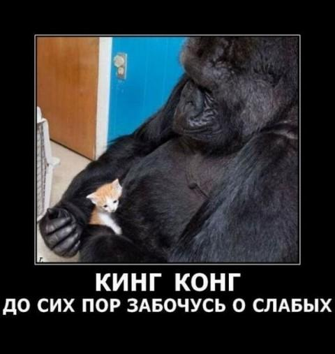 1327392303_monkey_8.jpeg