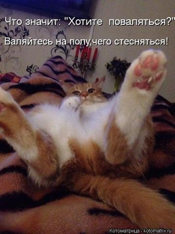 1354429764_kotomatritsa_ry.jpg