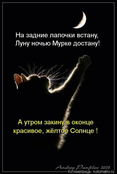 1354429776_kotomatritsa_eu.jpg