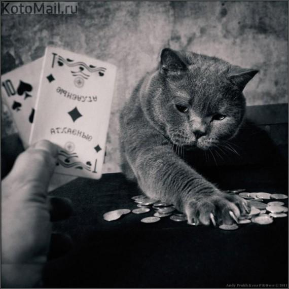 1358971085_catgirl_5.jpg