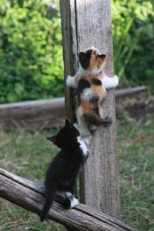 1362597116_funny_animals_20130306_02530_003.jpg