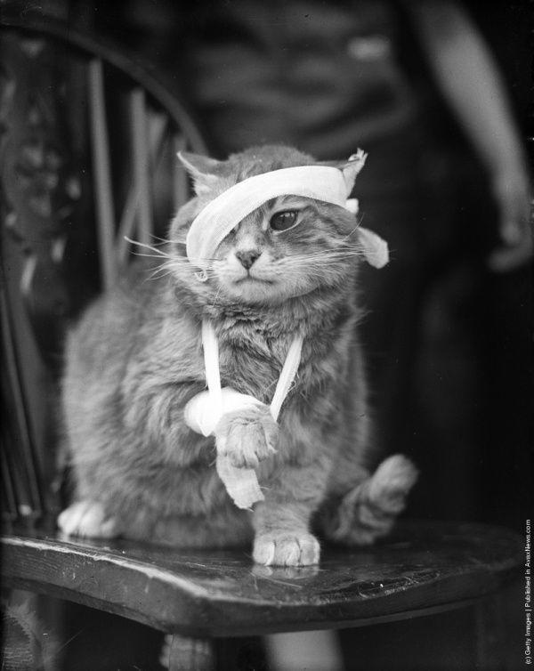 cats_21.jpg