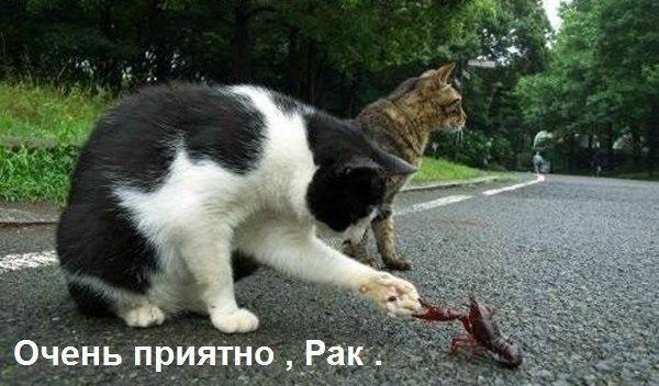 decfdy-ru2e.jpg