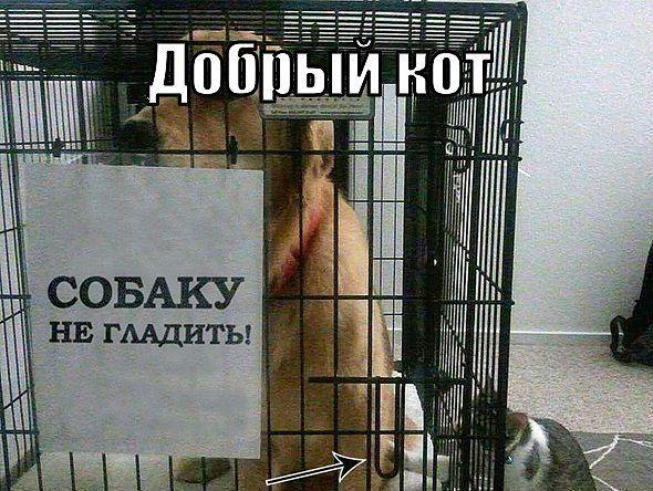 dobryy_kot.jpg