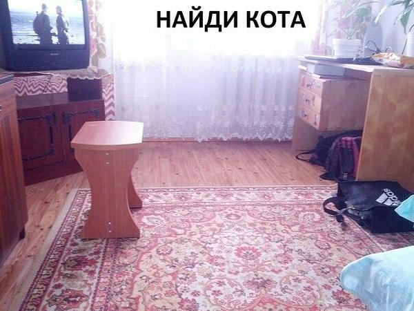 kote1.jpg