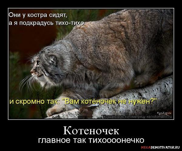 kotenochek-glavnoe-tak-tixoooonechko_1.jpg