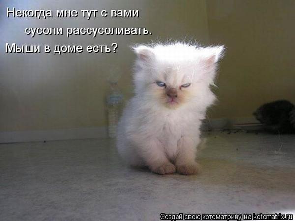 kotomatritsa_dt.jpg