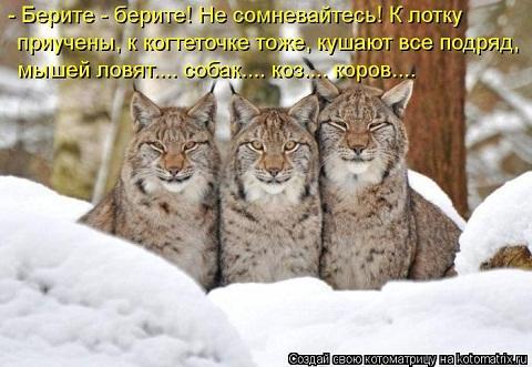kotomatritsa_id.jpg