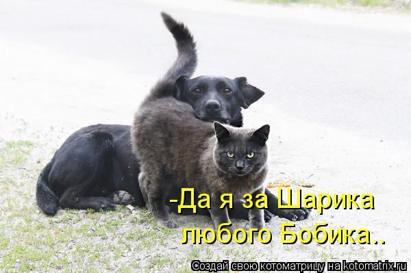 kotomatritsa_oo.jpg