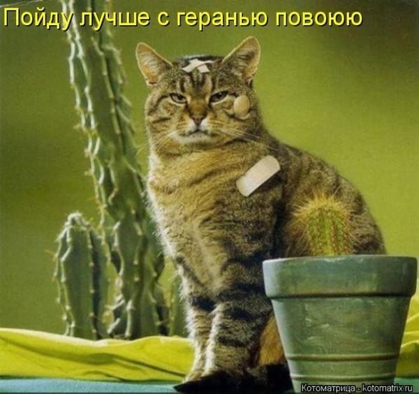 kotomatrix_24u.jpg