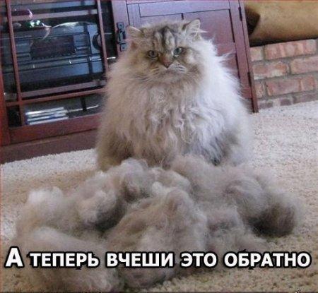 vcheshi.jpg