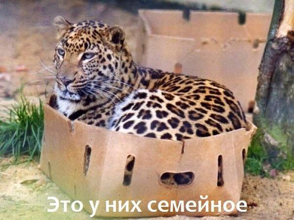 wubr0iyvq-o.jpg