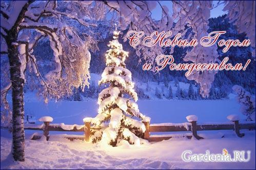 novogodnee_pozdravlenie.jpg