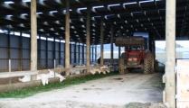 dairy-goat-barns-9.jpg