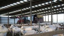 dairy-goat-barns-gallery-3.jpg