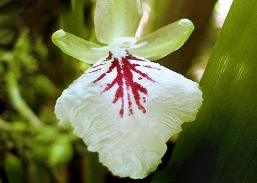 cvetykardamona.jpg