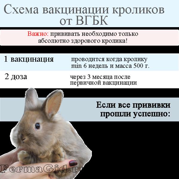 shema-vakcinacii-vgbk.png