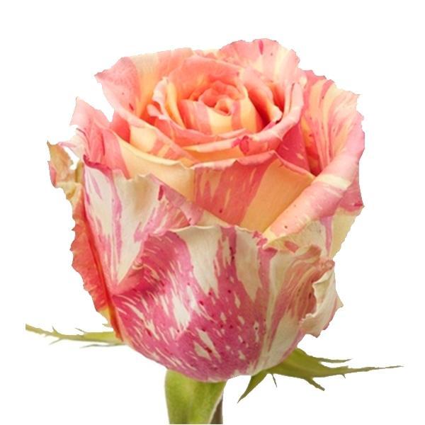 rosefiesta2600x600.jpg