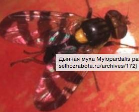 snimokekrana2016-02-02v213545.png