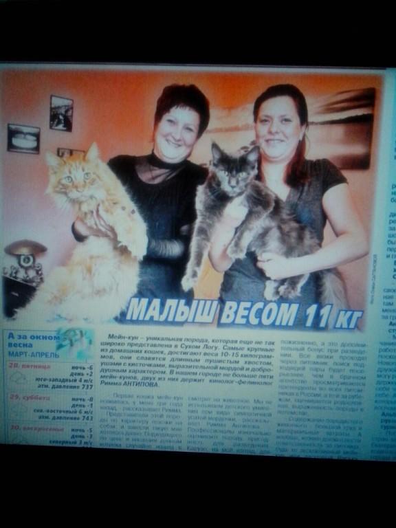 gazet.jpg