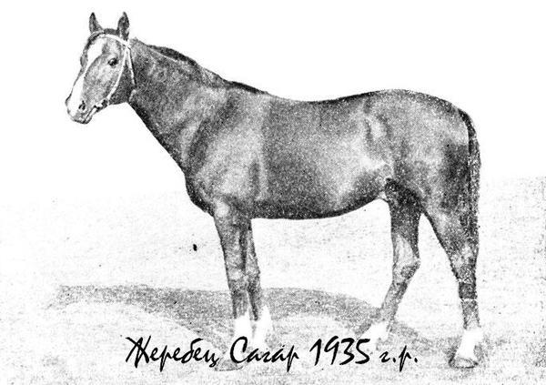 sagar-1935.jpg