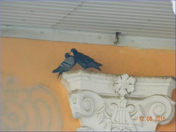 golubi.jpg